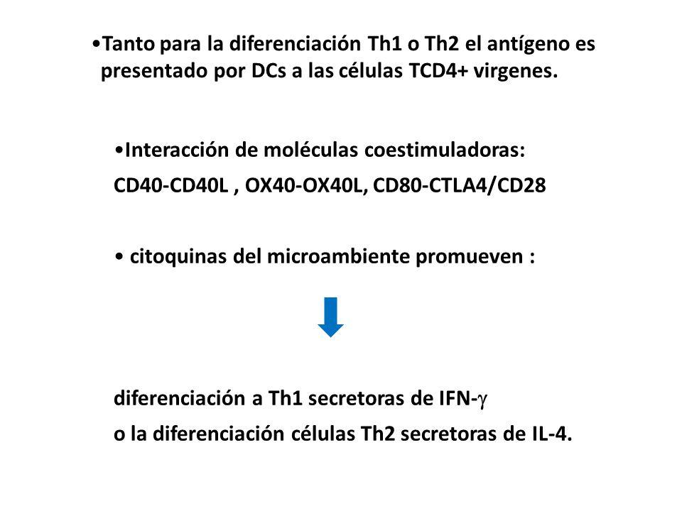Tanto para la diferenciación Th1 o Th2 el antígeno es