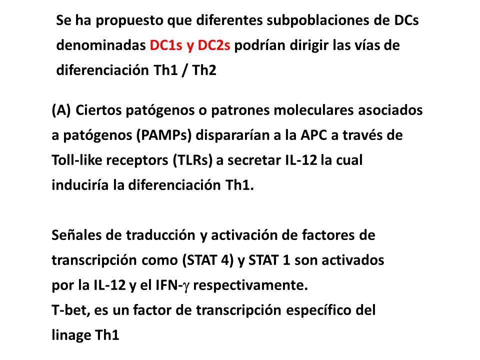 Se ha propuesto que diferentes subpoblaciones de DCs