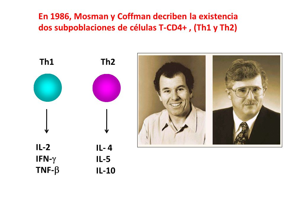 En 1986, Mosman y Coffman decriben la existencia