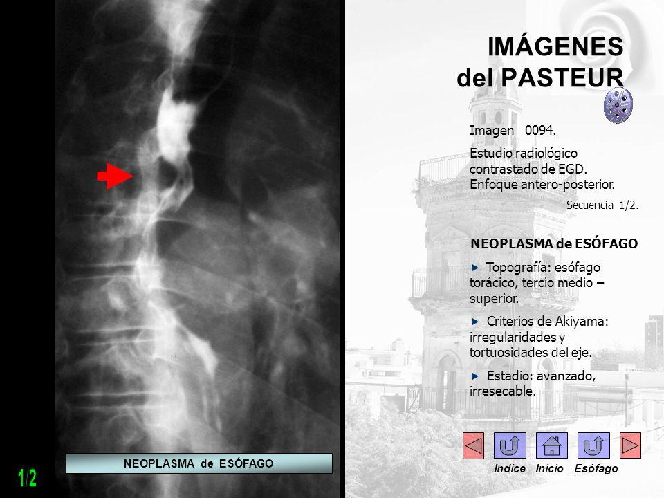 1/2 IMÁGENES del PASTEUR Imagen 0094.