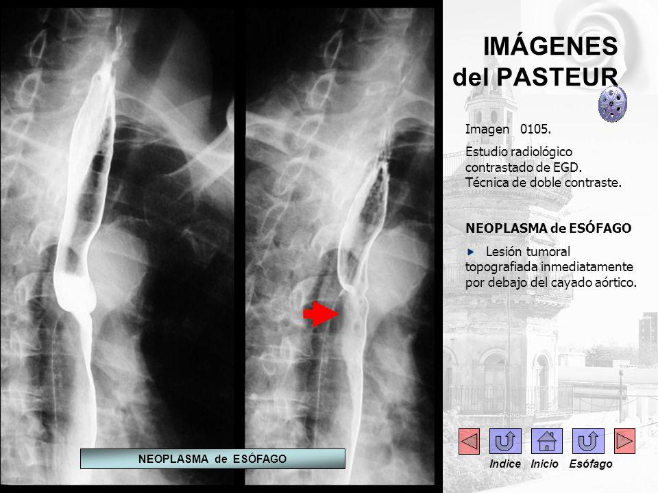 IMÁGENES del PASTEUR Imagen 0105.