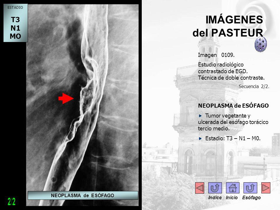 2/2 IMÁGENES del PASTEUR T3 N1 MO - - Imagen 0109.