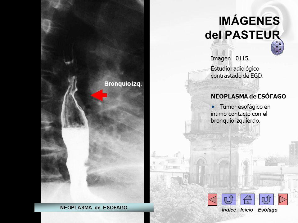 IMÁGENES del PASTEUR Imagen 0115.