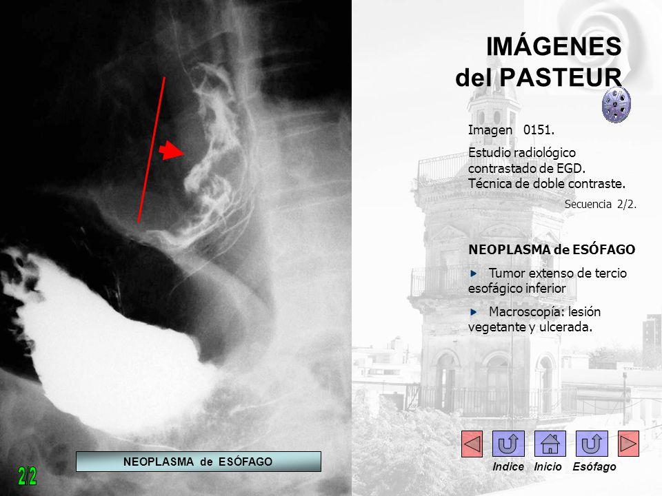 2/2 IMÁGENES del PASTEUR Imagen 0151.