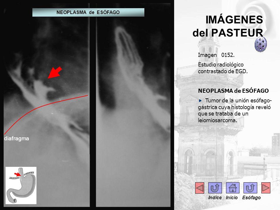 IMÁGENES del PASTEUR Imagen 0152.