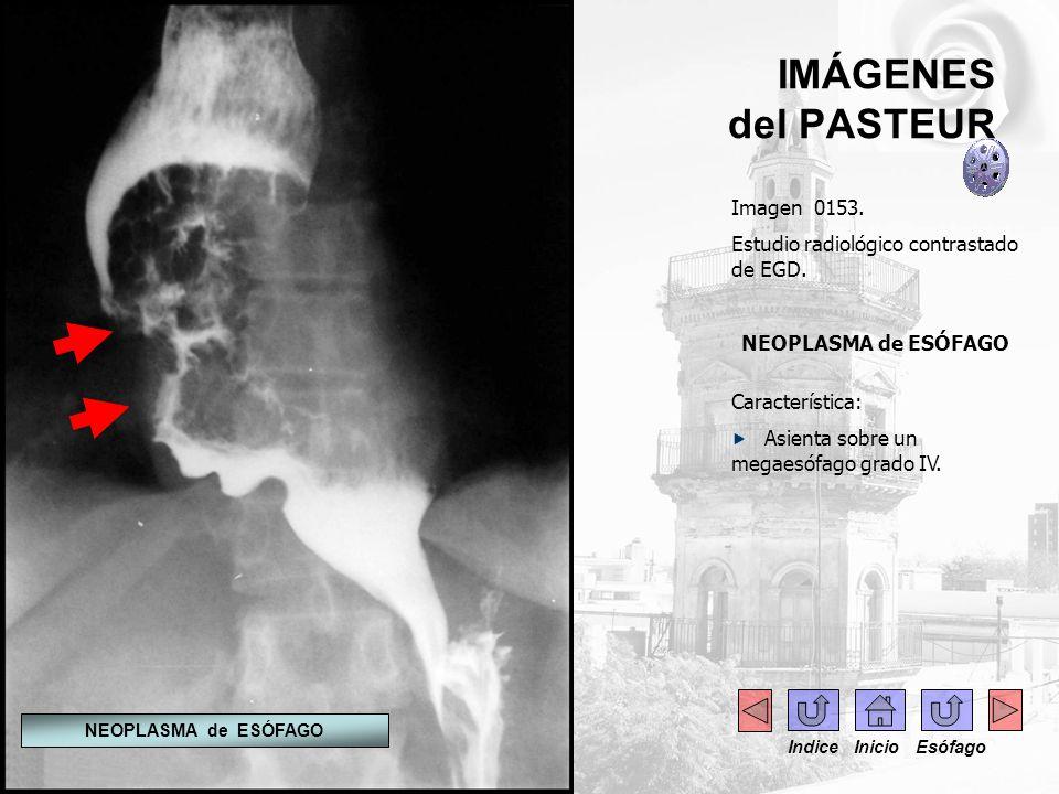 IMÁGENES del PASTEUR Imagen 0153.