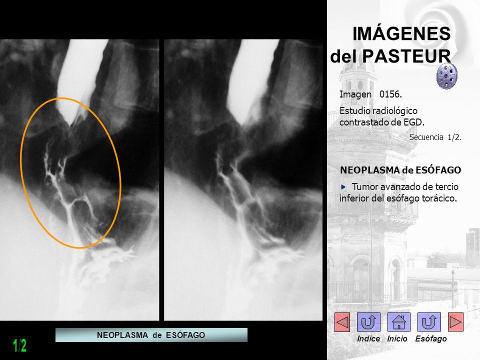 1/2 IMÁGENES del PASTEUR Imagen 0156.