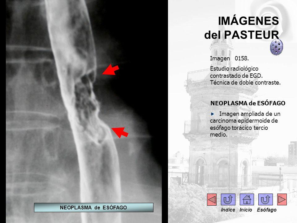 IMÁGENES del PASTEUR - Imagen 0158.