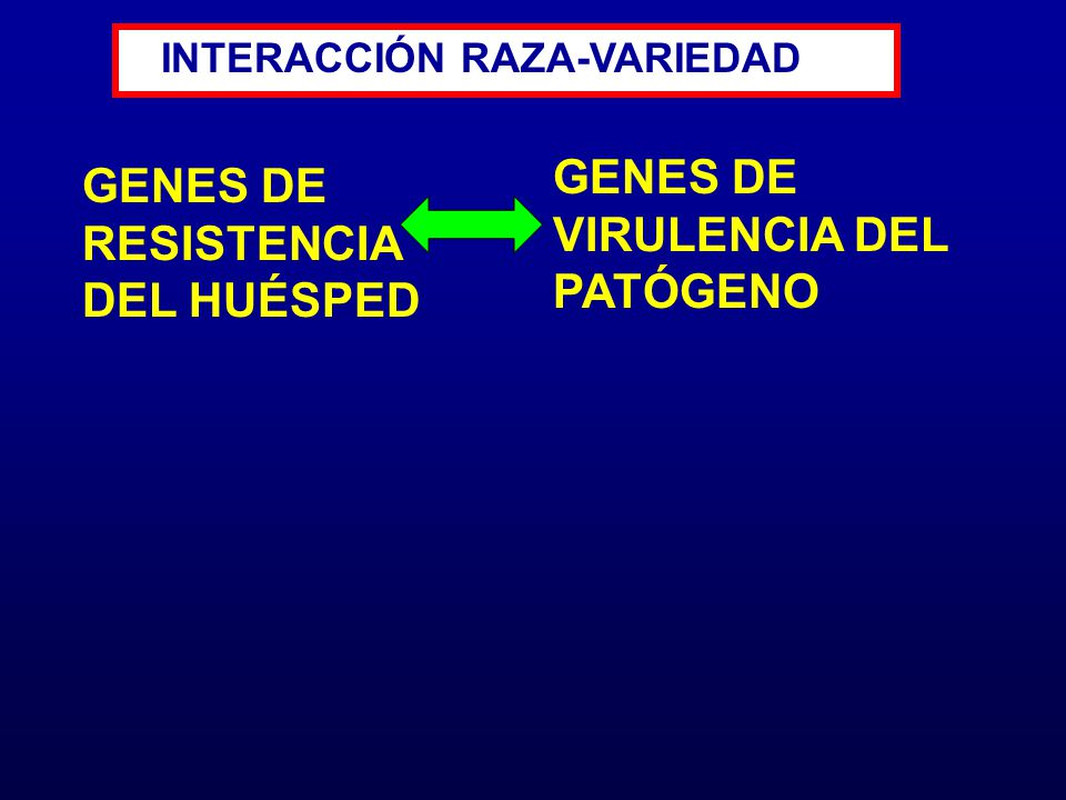 GENES DE VIRULENCIA DEL PATÓGENO GENES DE RESISTENCIA DEL HUÉSPED