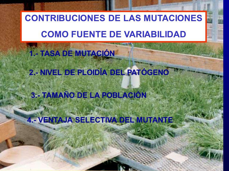 CONTRIBUCIONES DE LAS MUTACIONES COMO FUENTE DE VARIABILIDAD
