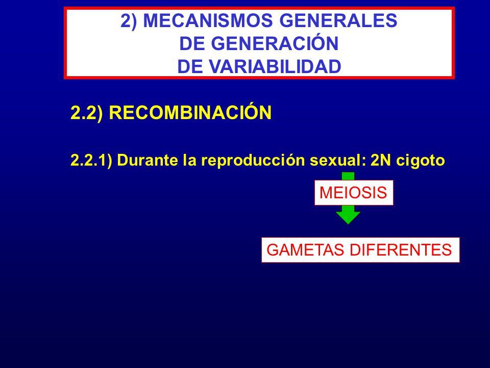 2) MECANISMOS GENERALES DE GENERACIÓN DE VARIABILIDAD