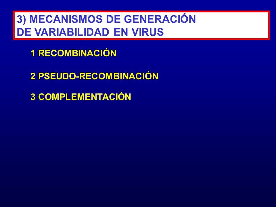 3) MECANISMOS DE GENERACIÓN DE VARIABILIDAD EN VIRUS