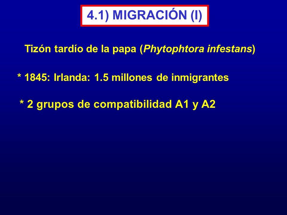 4.1) MIGRACIÓN (I) * 2 grupos de compatibilidad A1 y A2