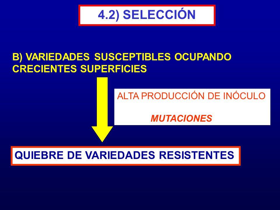 4.2) SELECCIÓN QUIEBRE DE VARIEDADES RESISTENTES