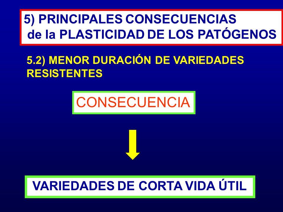 CONSECUENCIA 5) PRINCIPALES CONSECUENCIAS