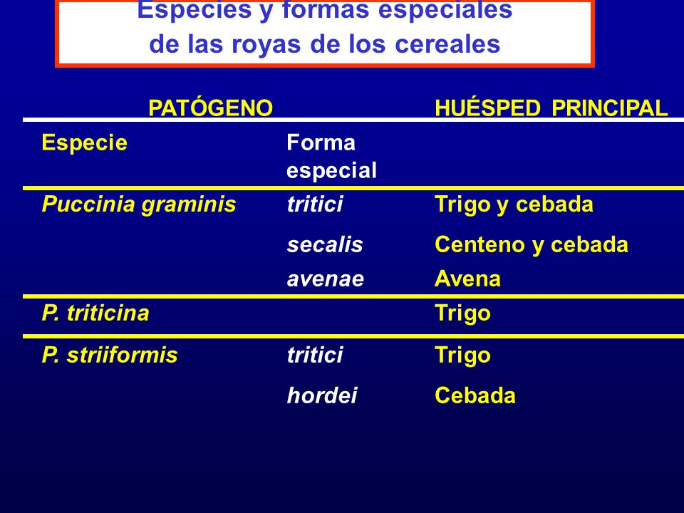 Especies y formas especiales de las royas de los cereales