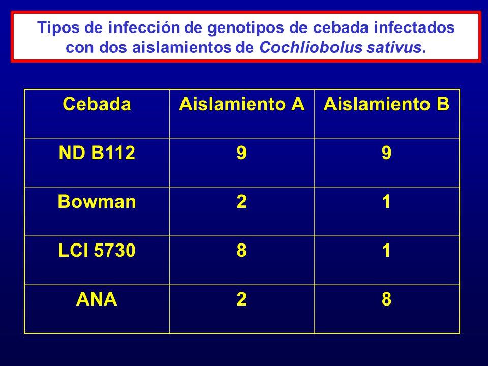 Cebada Aislamiento A Aislamiento B ND B112 9 Bowman 2 1 LCI 5730 8 ANA