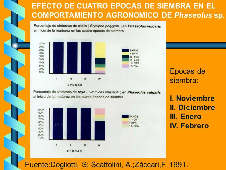 EFECTO DE CUATRO EPOCAS DE SIEMBRA EN EL