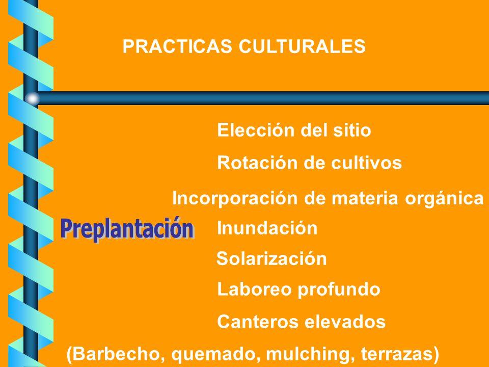 Preplantación PRACTICAS CULTURALES Elección del sitio