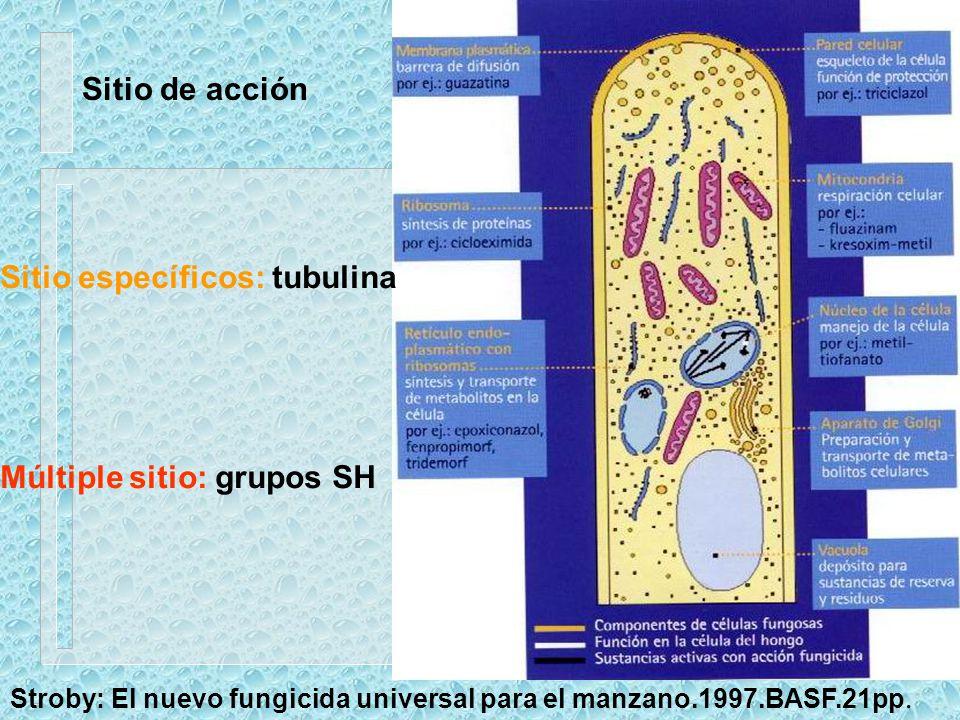 Sitio específicos: tubulina