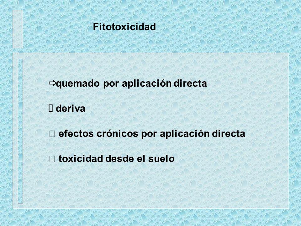 Fitotoxicidad quemado por aplicación directa. deriva.