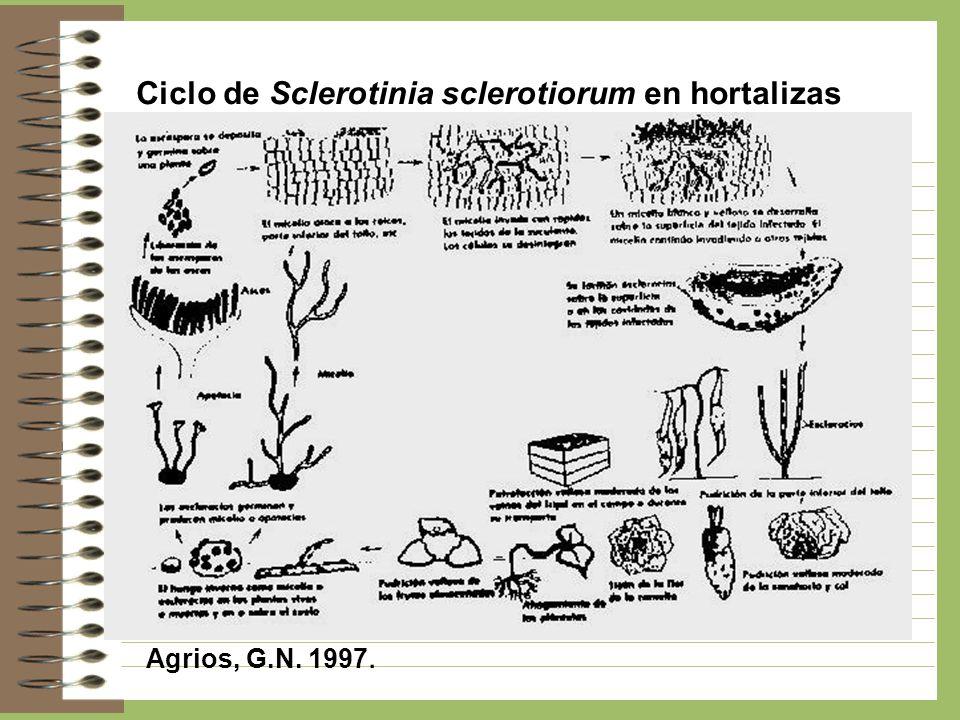 Ciclo de Sclerotinia sclerotiorum en hortalizas