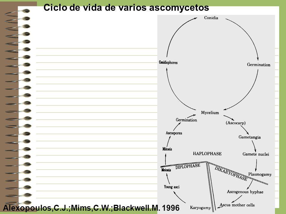 Ciclo de vida de varios ascomycetos