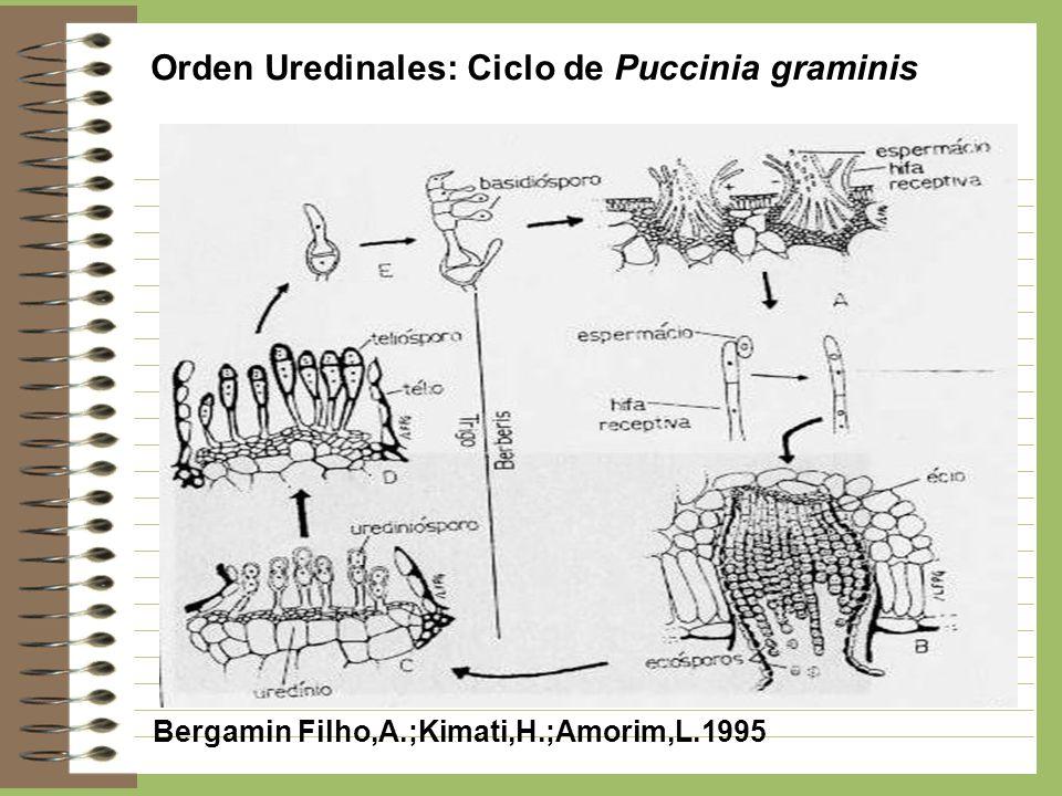 Orden Uredinales: Ciclo de Puccinia graminis