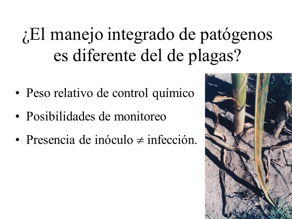 ¿El manejo integrado de patógenos es diferente del de plagas