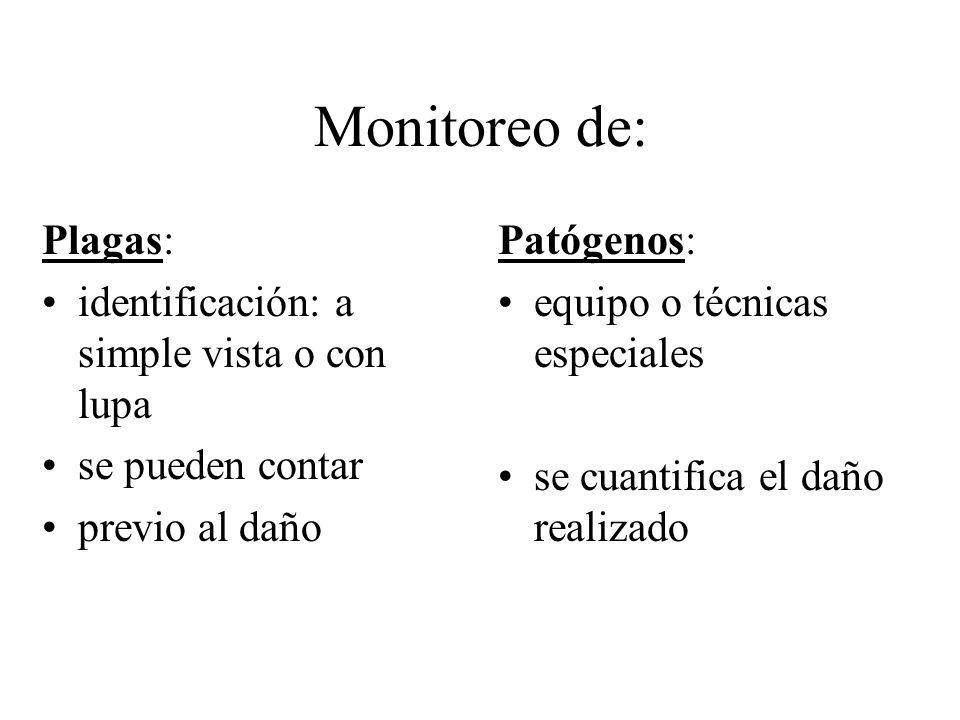Monitoreo de: Plagas: identificación: a simple vista o con lupa