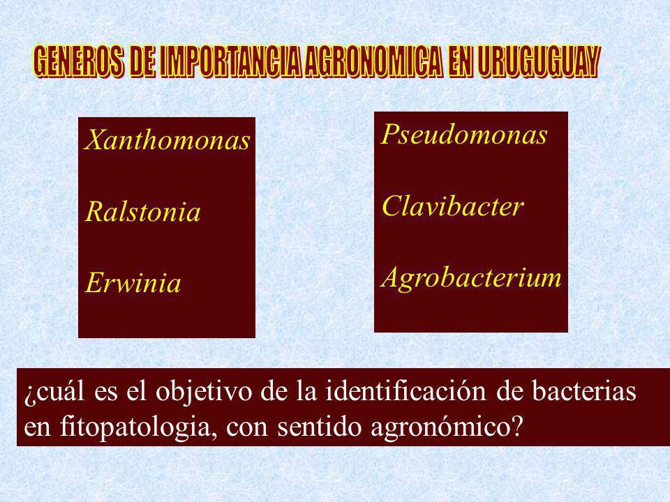 GENEROS DE IMPORTANCIA AGRONOMICA EN URUGUGUAY