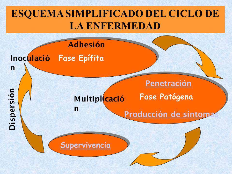 ESQUEMA SIMPLIFICADO DEL CICLO DE LA ENFERMEDAD