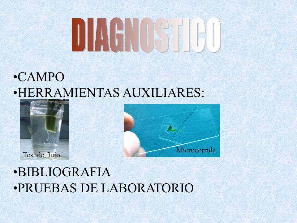DIAGNOSTICO CAMPO HERRAMIENTAS AUXILIARES: BIBLIOGRAFIA