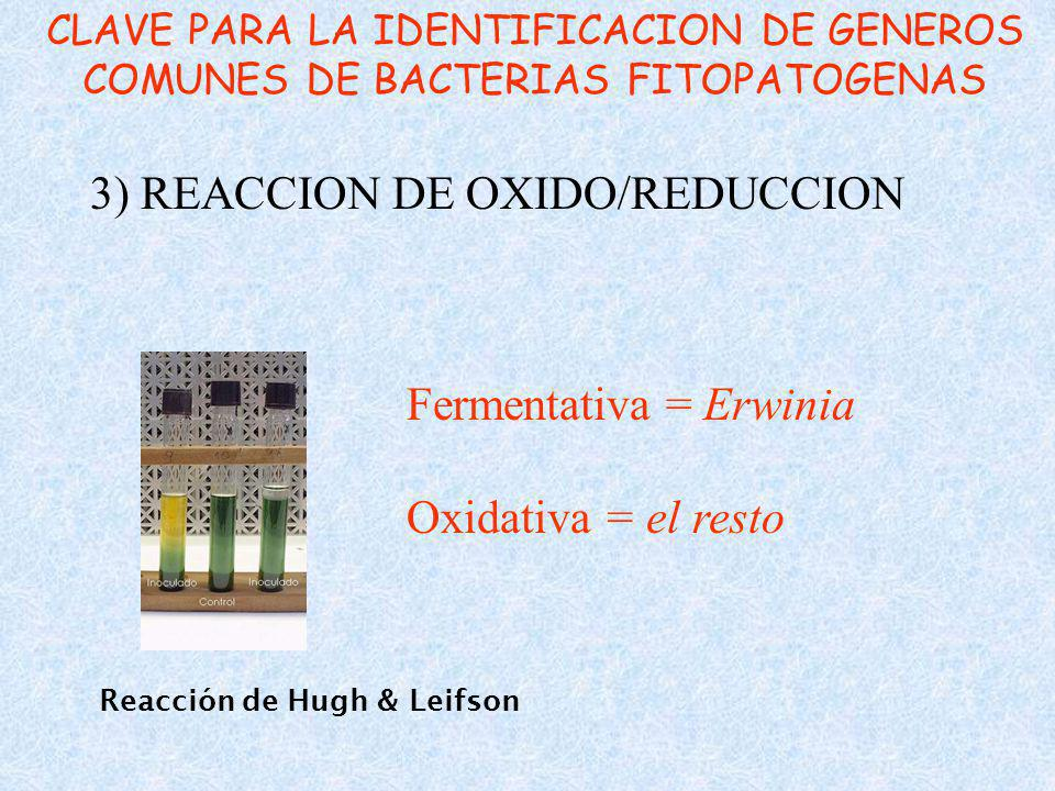 3) REACCION DE OXIDO/REDUCCION
