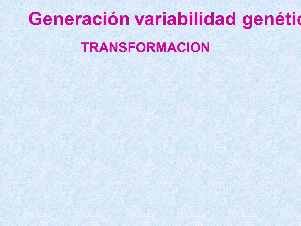 Generación variabilidad genética