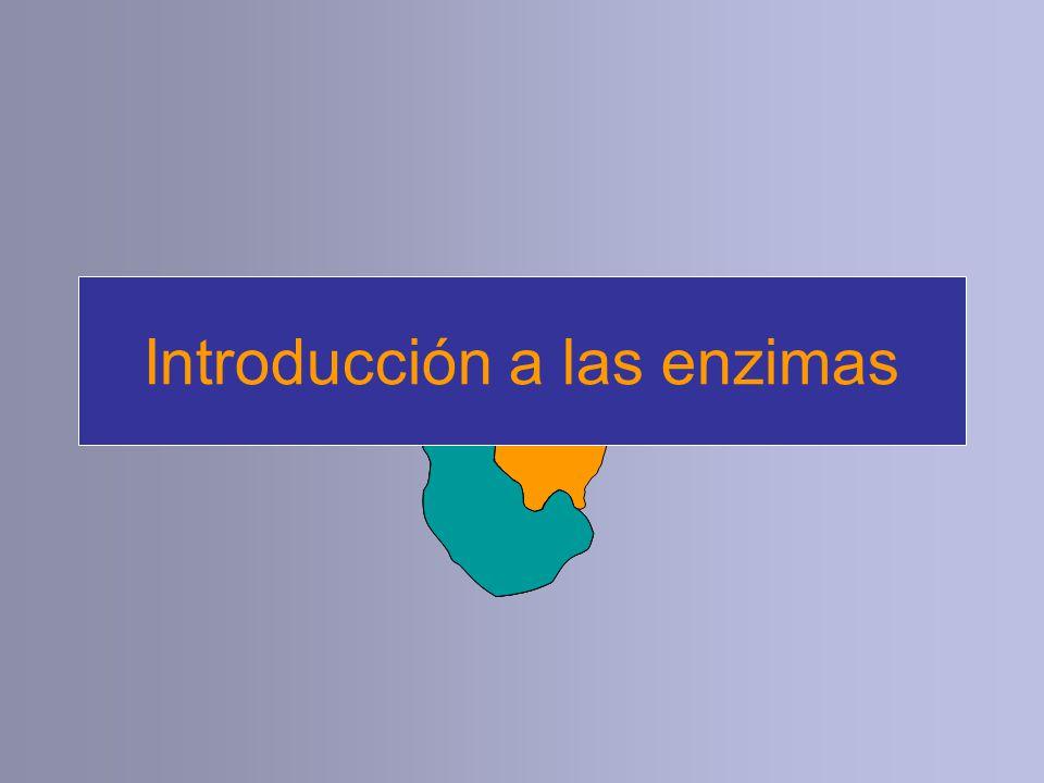 Introducción a las enzimas