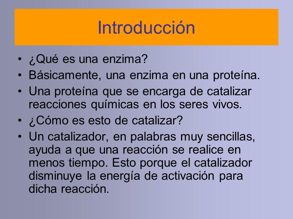 Introducción ¿Qué es una enzima