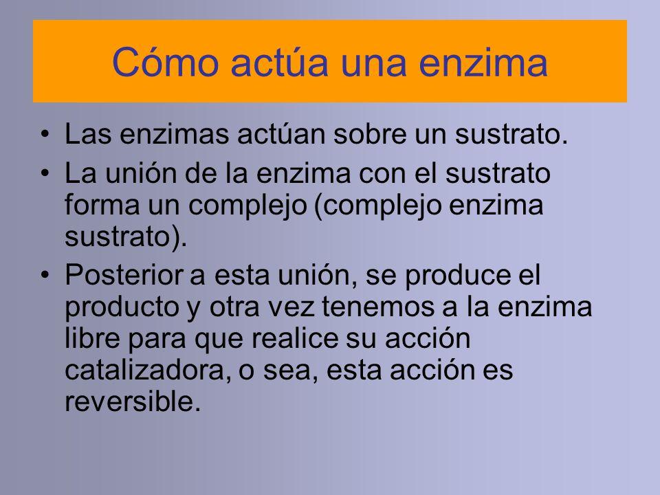 Cómo actúa una enzima Las enzimas actúan sobre un sustrato.