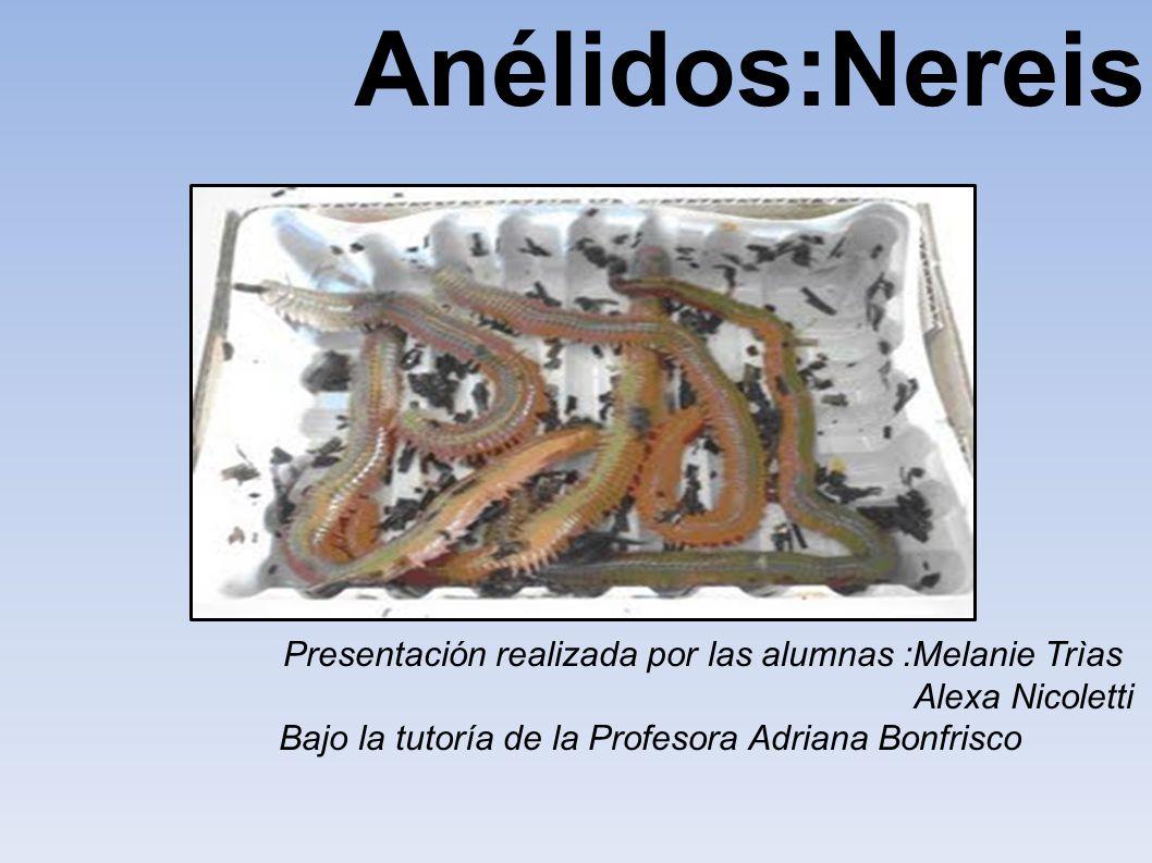 Anélidos:Nereis Anèlidos Melanie Trìas Alexa Nicoletti