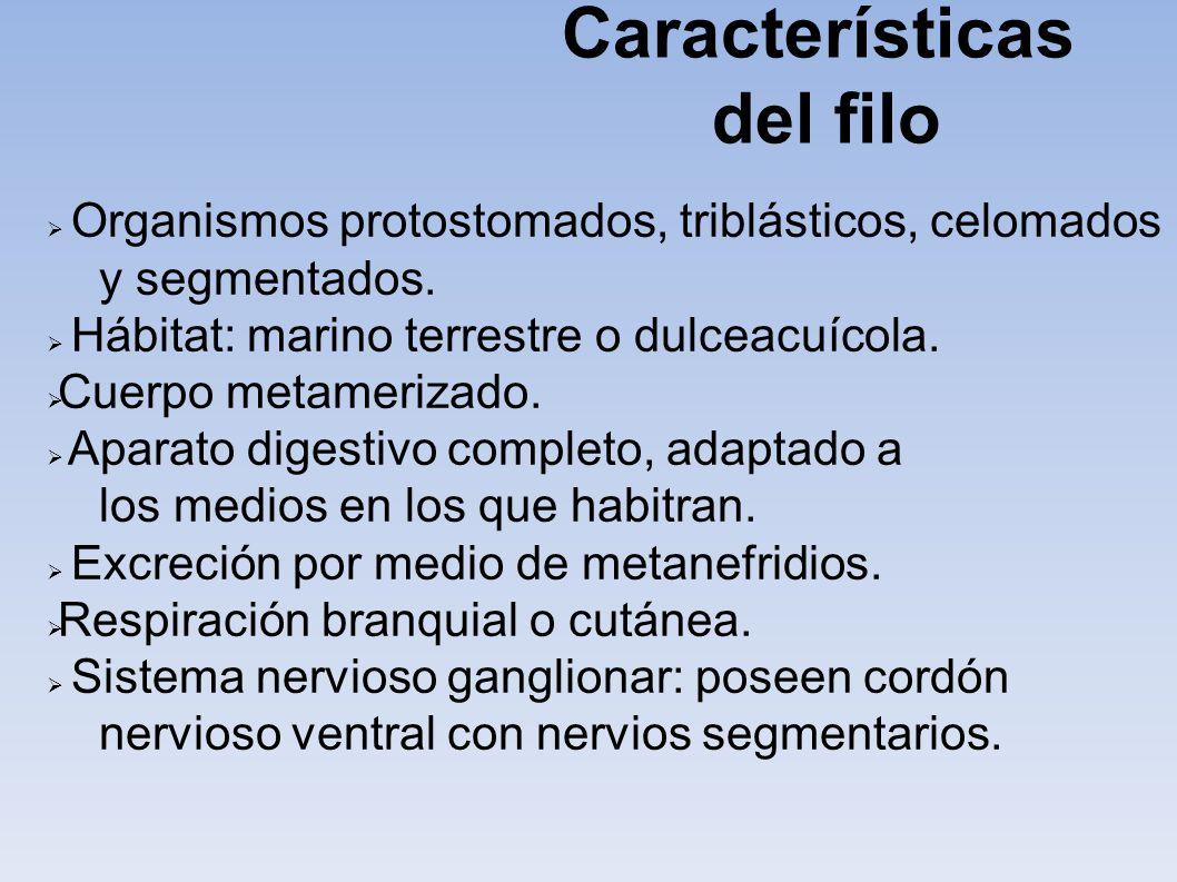 Características del filo