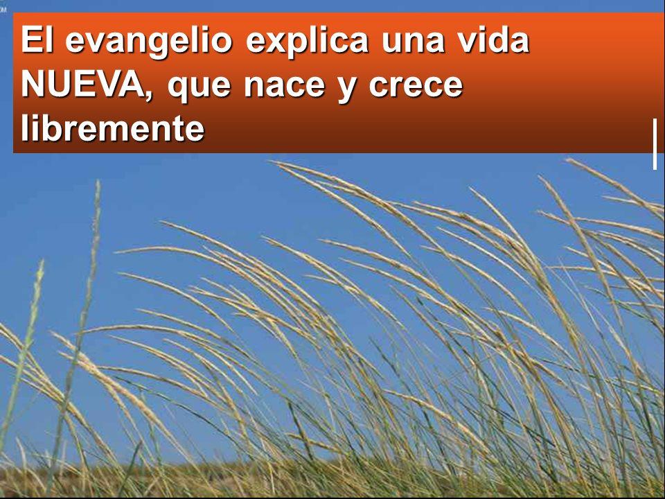El evangelio explica una vida NUEVA, que nace y crece libremente