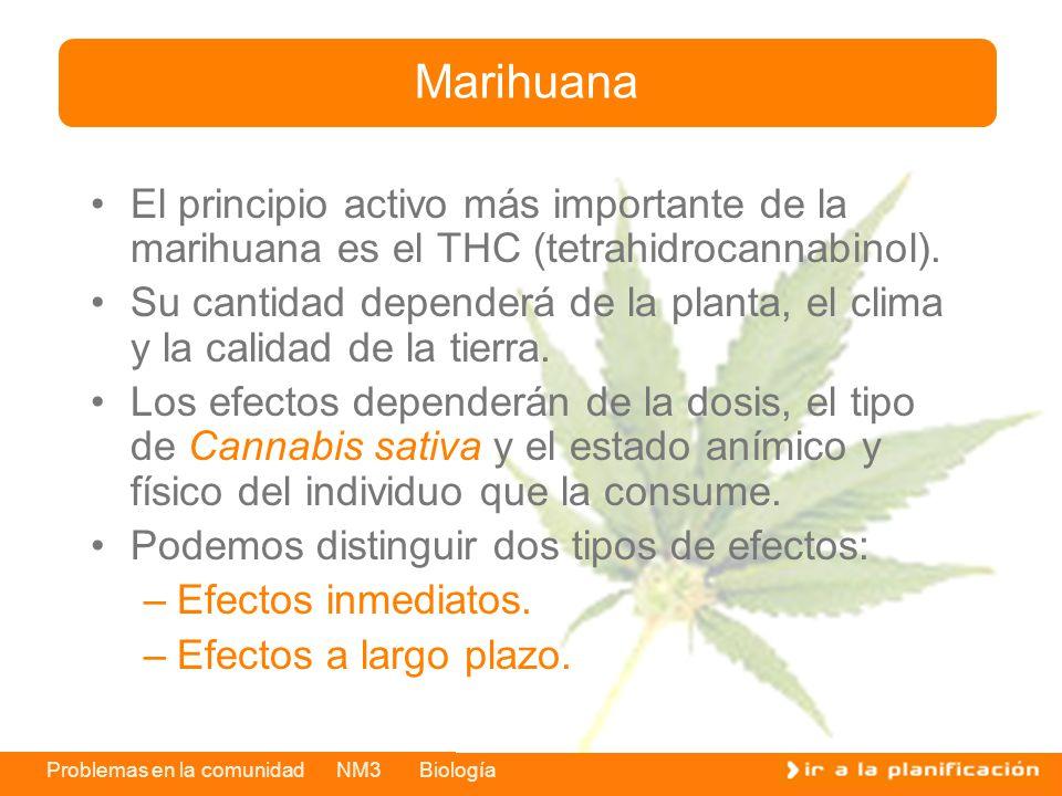 Marihuana El principio activo más importante de la marihuana es el THC (tetrahidrocannabinol).