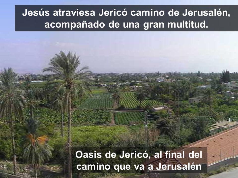 Oasis de Jericó, al final del camino que va a Jerusalén