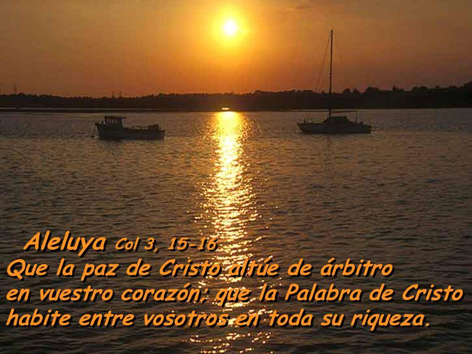 Aleluya Col 3, 15-16 Que la paz de Cristo altúe de árbitro en vuestro corazón; que la Palabra de Cristo habite entre vosotros en toda su riqueza.