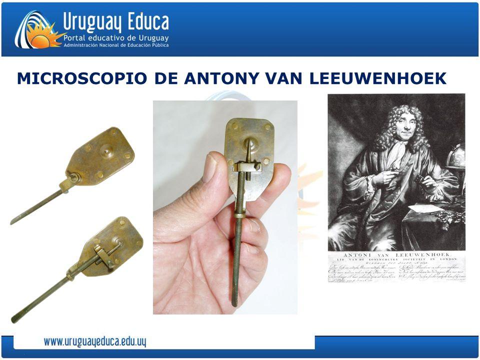 MICROSCOPIO DE ANTONY VAN LEEUWENHOEK