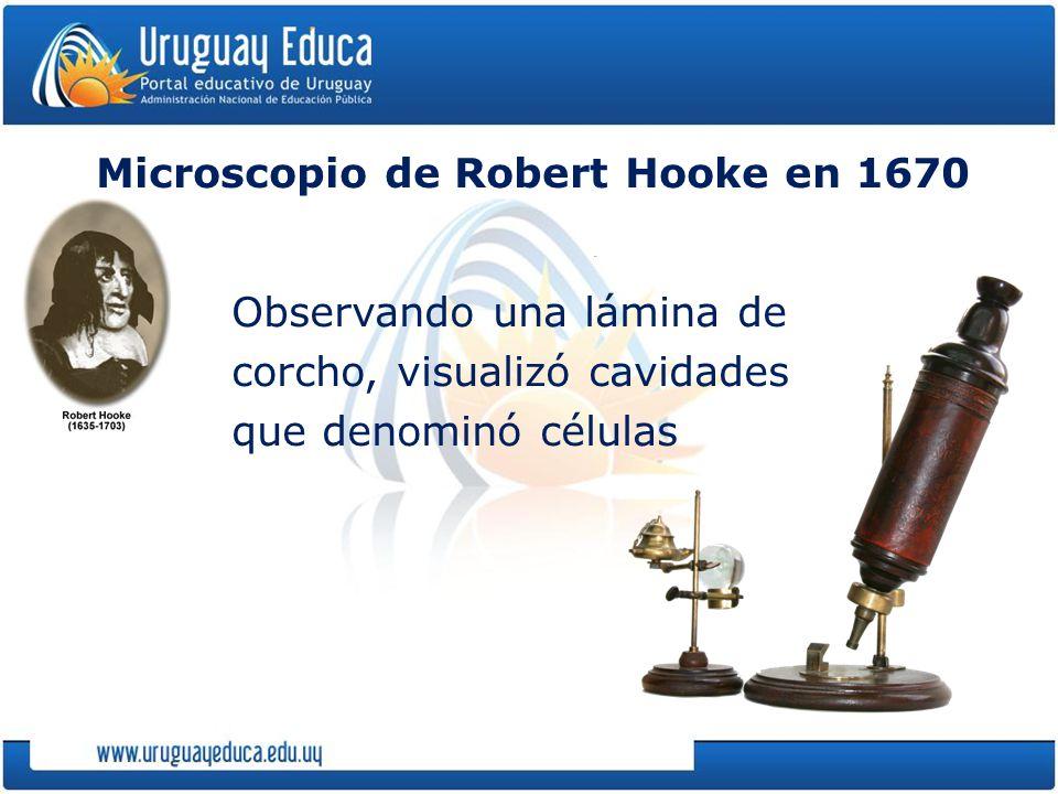 Microscopio de Robert Hooke en 1670