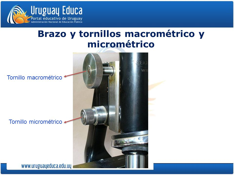 Brazo y tornillos macrométrico y micrométrico