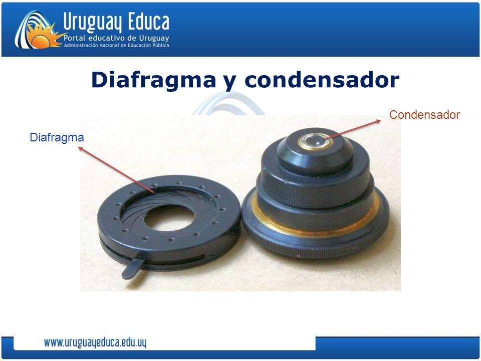 Diafragma y condensador