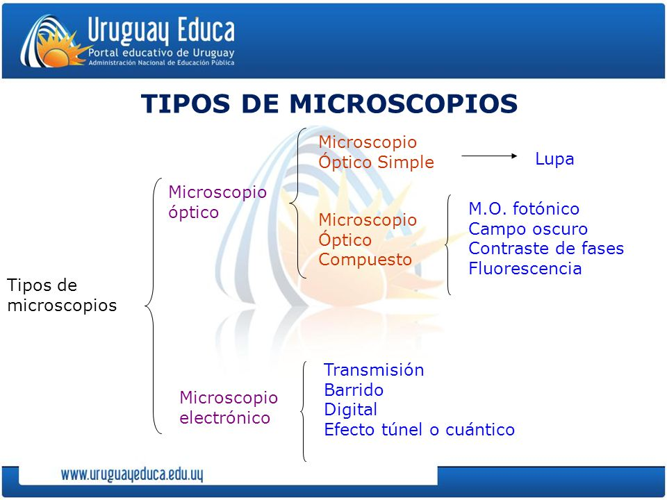 TIPOS DE MICROSCOPIOS Microscopio Óptico Simple Lupa Microscopio