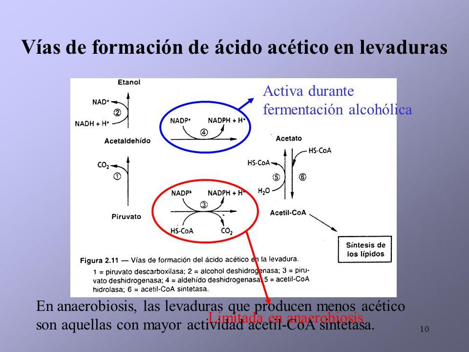 Vías de formación de ácido acético en levaduras
